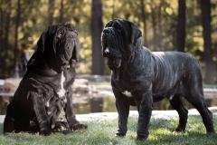 Черный и тигровый
