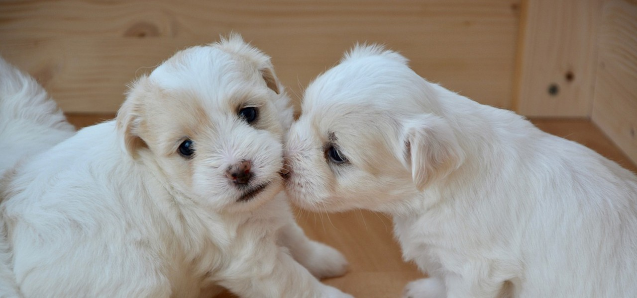 Как выбрать щенка или на что обратить внимание?