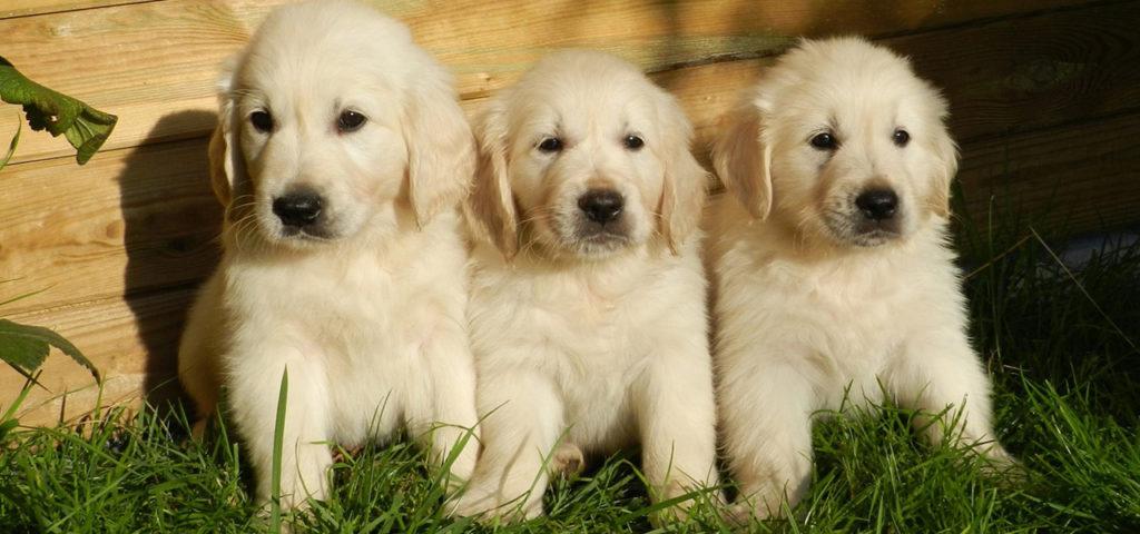 Какого возраста выбрать собаку