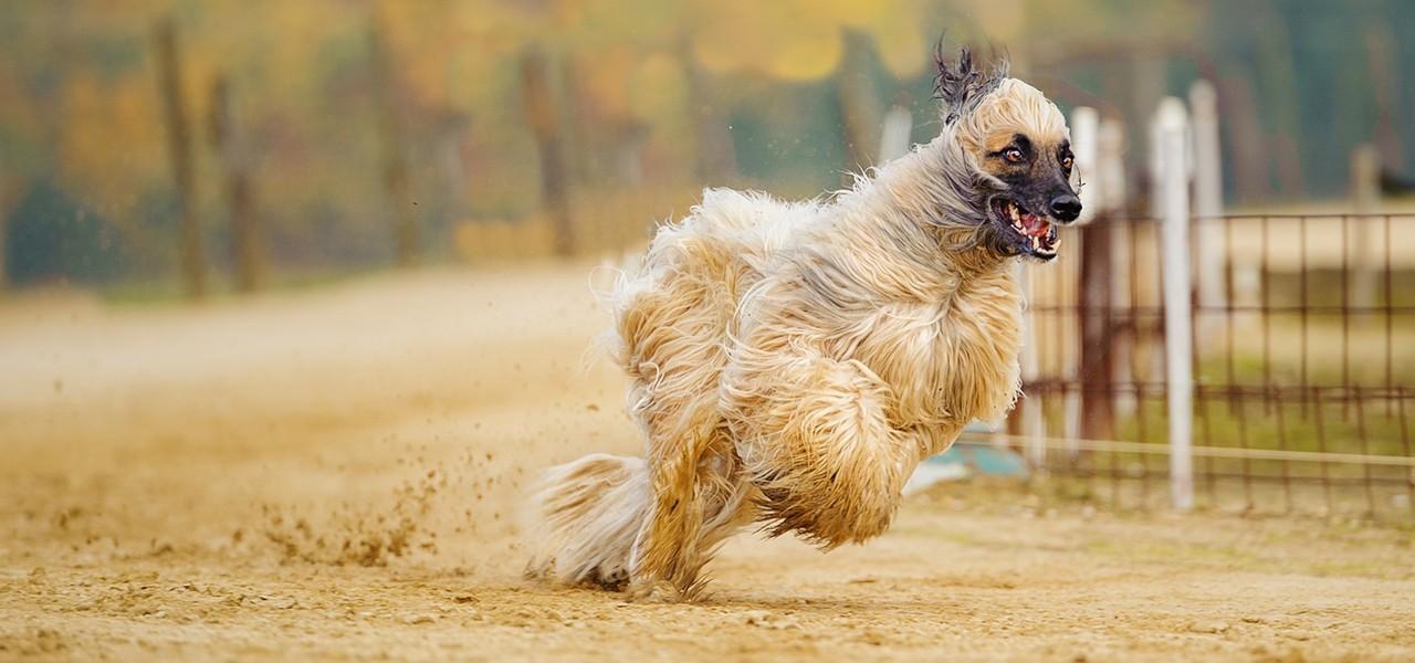 Команда «Ко мне!». Как научить собаку и щенка команде «Ко мне»?