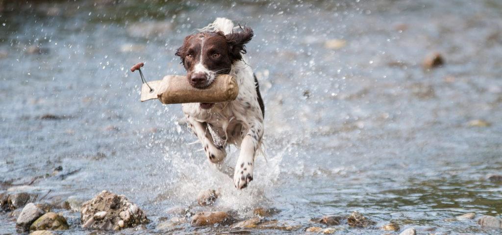 В каком возрасте лучше начать дрессировку щенка?