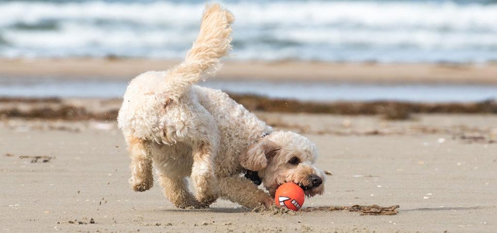 Игра с собакой или щенком