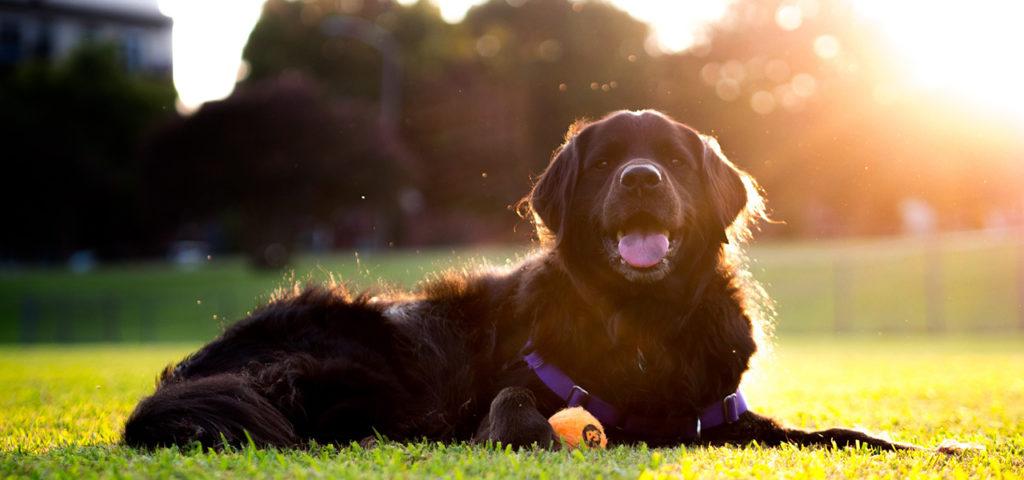 Как-научить-собаку-или-щенка-команде-Дай