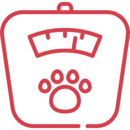 Средний вес Японский шпиц