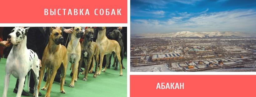 Выставка собак в Абакане