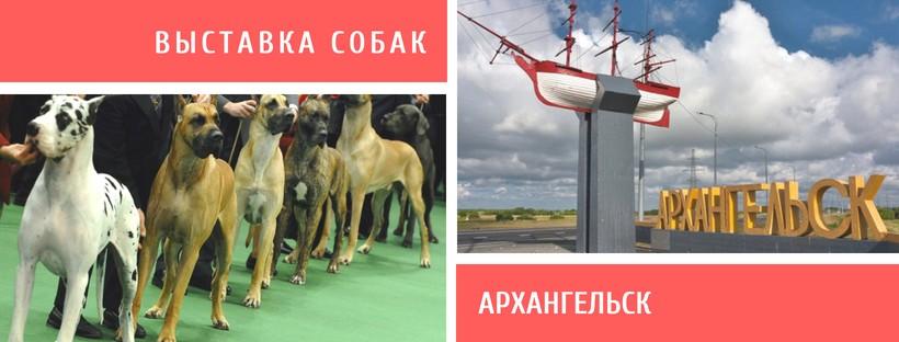 Выставка собак в Архангельске