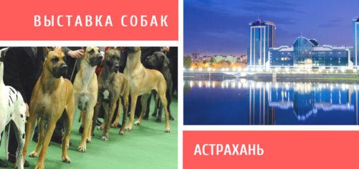 Выставка собак в Астрахани