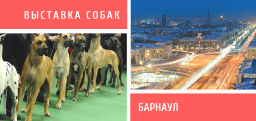 Выставка собак в Барнауле