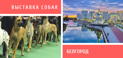 Выставка собак в Белгороде
