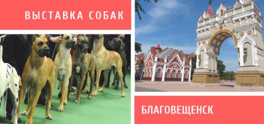 Выставка собак в Благовещенске