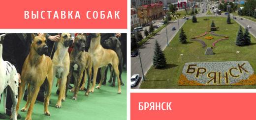 Выставка собак в Брянске