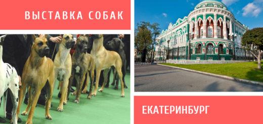 Выставка собак в Екатеринбурге