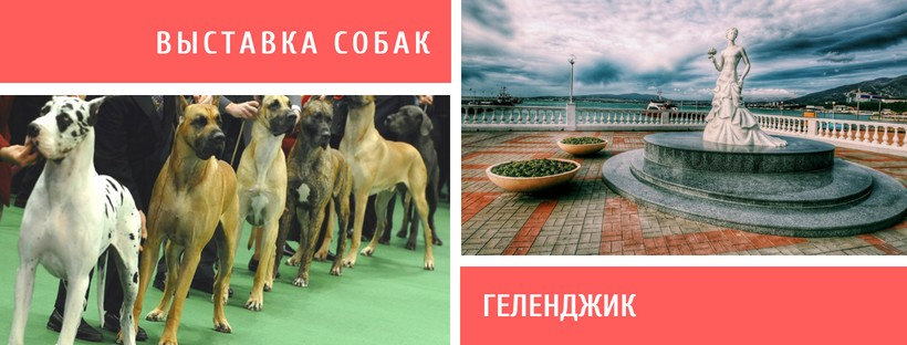 Выставка собак в Геленджике