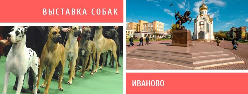 Выставка собак в Иваново