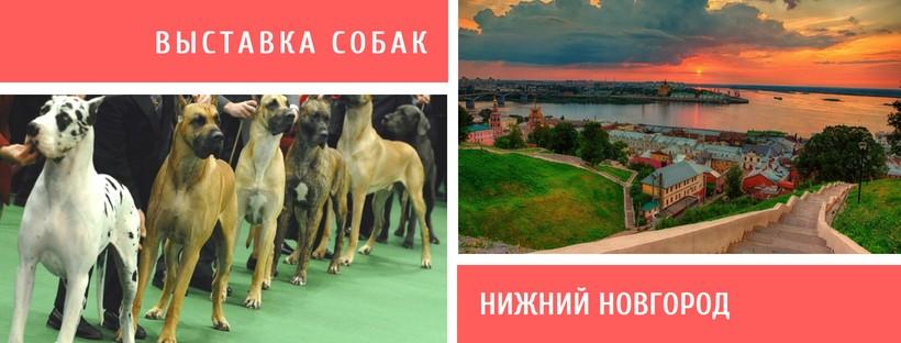 Выставка собак в Нижнем Новгороде