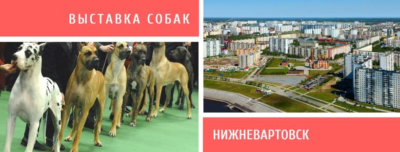 Выставка собак в Нижневартовске
