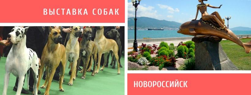 Выставка собак в Новороссийске