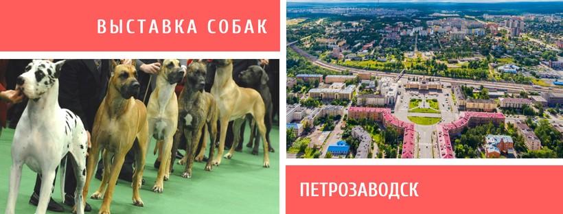 Выставка собак в Петрозаводске