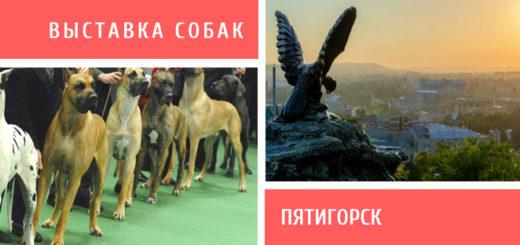 Выставка собак в Пятигорске