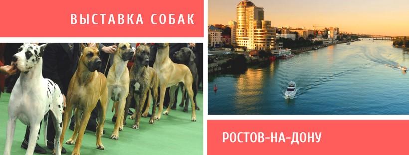 Выставка собак в Ростове-на-Дону