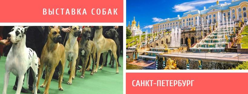 Выставка собак в Санкт-Петербурге