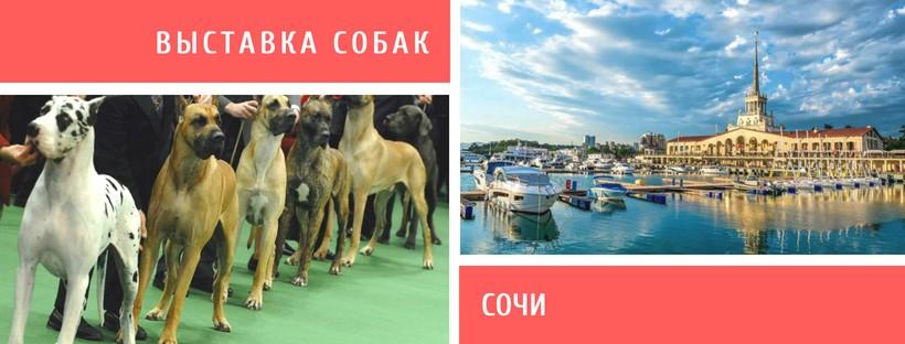 Выставка собак в Сочи
