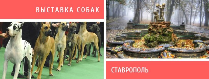Выставка собак в Ставрополе