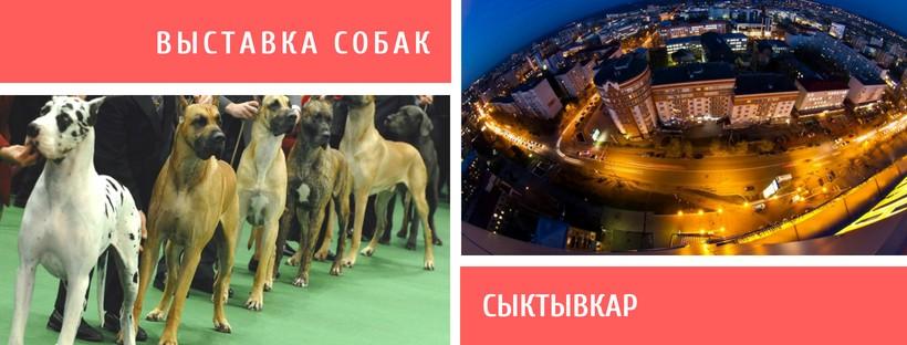 Выставка собак в Сыктывкаре