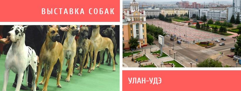 Выставка собак в Улан-Удэ