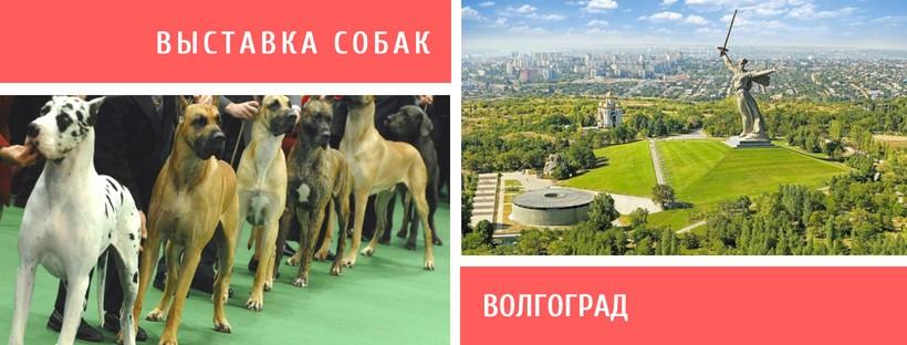 Выставка собак в Волгограде