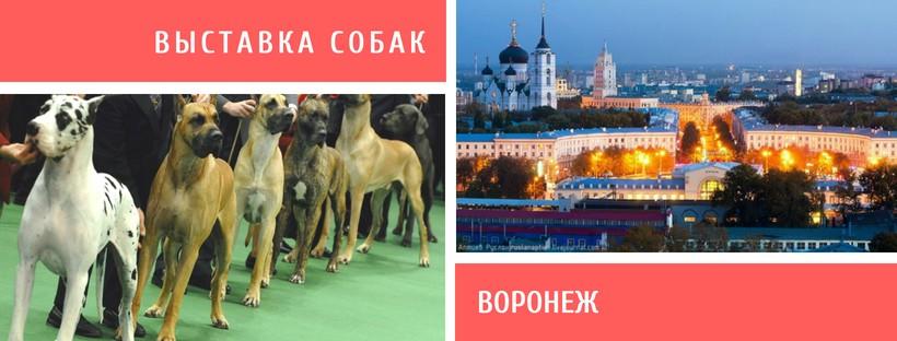 Выставка собак в Воронеже