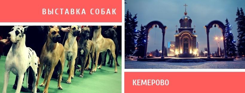 Выставка собак в Кемерово