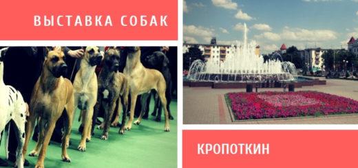 Выставка собак в Кропоткине