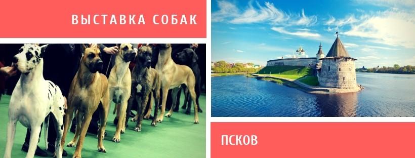 Выставка собак в Пскове