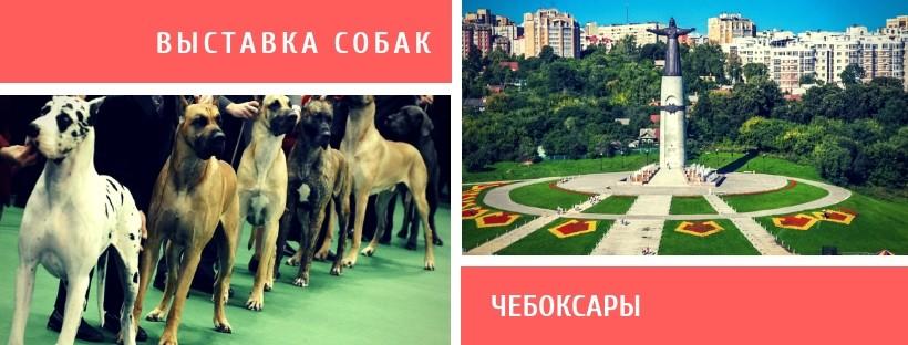 Выставка собак в Чебоксарах