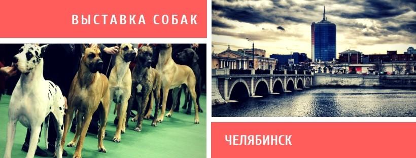 Выставка собак в Челябинске