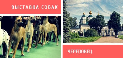 Выставка собак в Череповце