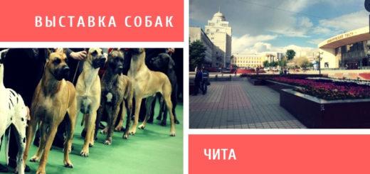 Выставка собак в Чите