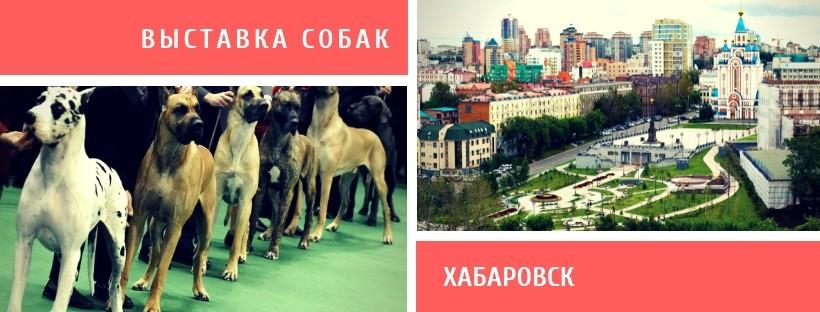 Выставка собак в Хабаровске