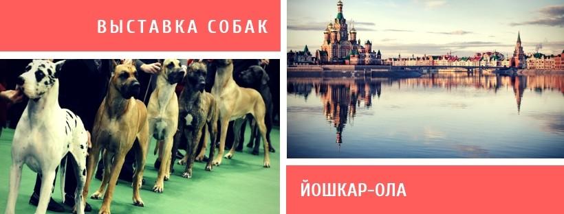 Выставка собак в Йошкар-Оле