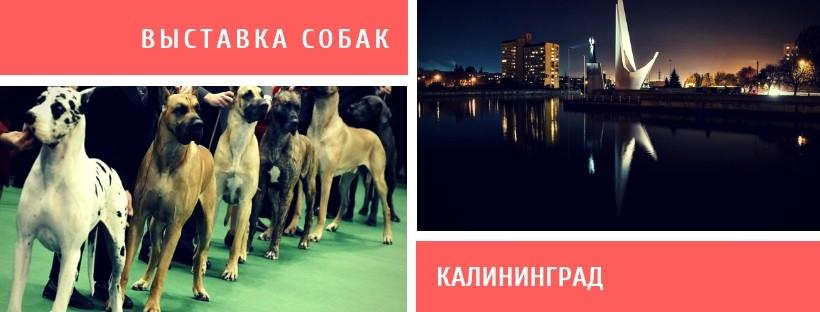 Выставка собак в Калининграде