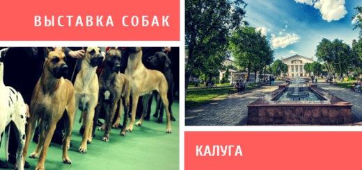 Выставка собак в Калуге