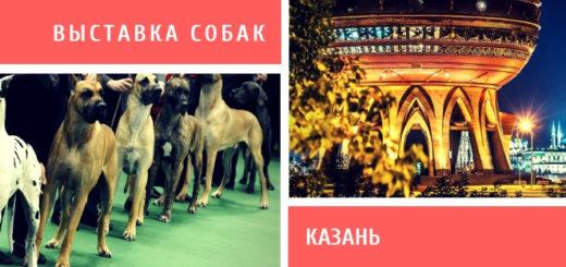 Выставка собак в Казани