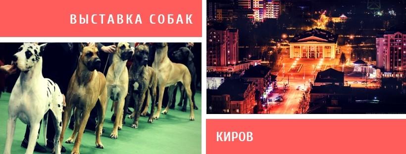 Выставка собак в Кирове