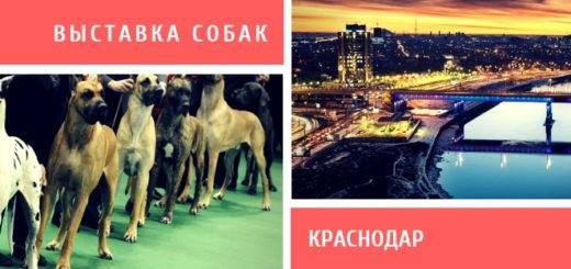 Выставка собак в Краснодаре