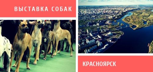 Выставка собак в Красноярске