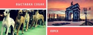 Выставка собак в Курске