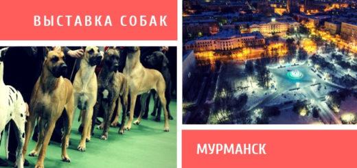 Выставка собак в Мурманске
