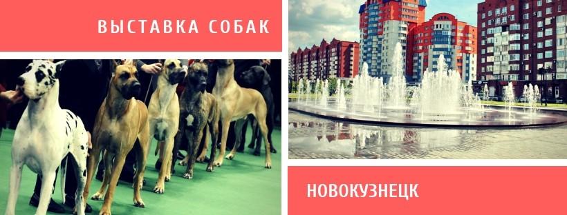 Выставка собак в Новокузнецке