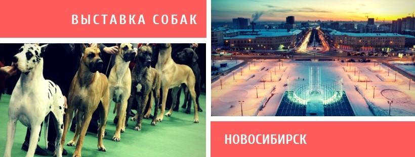 Выставка собак в Новосибирске